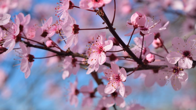 spring-season-flowers-os-2048x1152.jpg